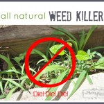 Vinegar as an All Natural Weed Killer