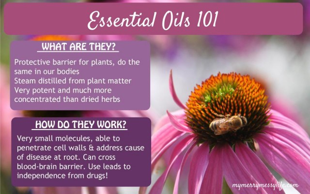 Essential Oils 101 - What Are They and How do they Work?