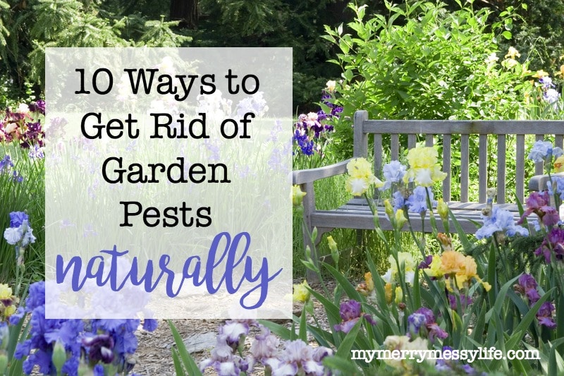 10 Ways to Get Rid of Garden Pests without Toxins